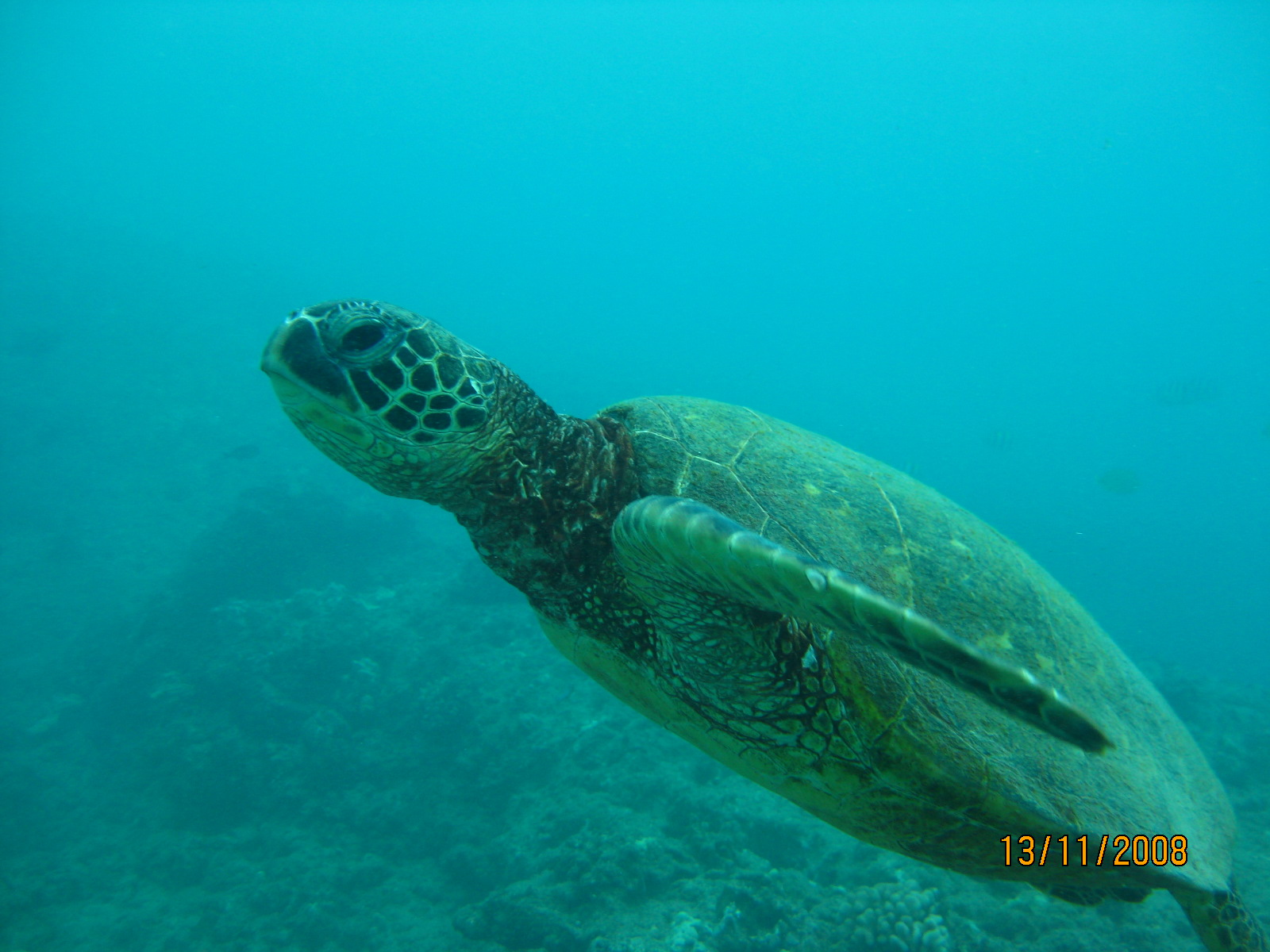 Turtle Hawaii
