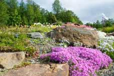 Botanisk hage i Tromsø
