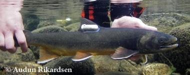 Freshwater-Ecology-Biology-master-Studiekatalog-380px-