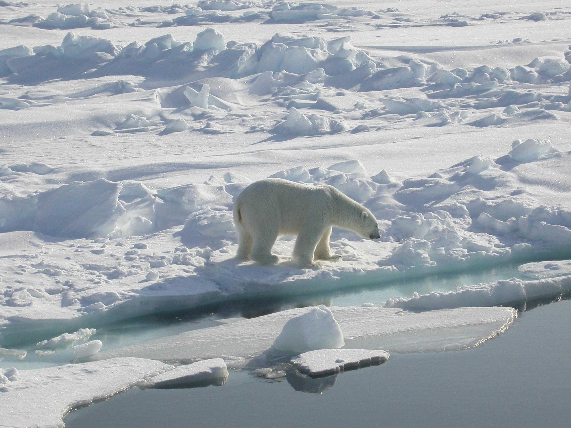 Polarbear - CONFLUX