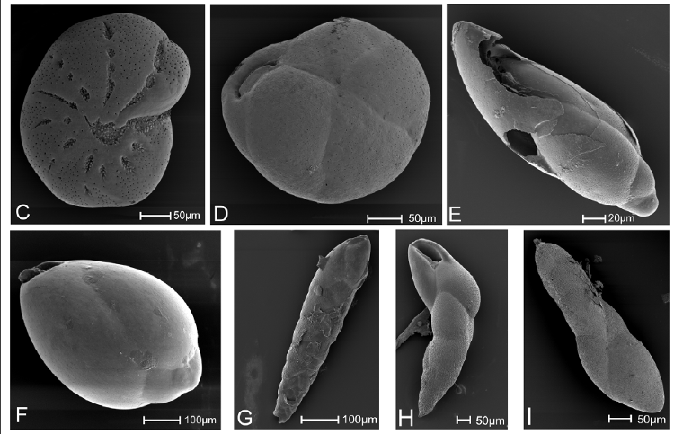 Mikrofossiler