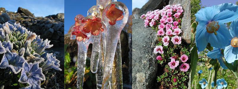 Hagen har 25 tema-samlinger, inkludert en nylig påbegynt peonsamling. Mange av samlingene har et imponerende planteutvalg som man nok ellers må lete lenge etter.Arktis-samlinga vil være et kjerneområde rundt det høyeste steinlandskapet i Hagen. Himalaya og Sør-Amerika er også store samlinger, og Hagen har faktisk en egen Afrika-samling der plantene overlever en Tromsø-vinter ute.