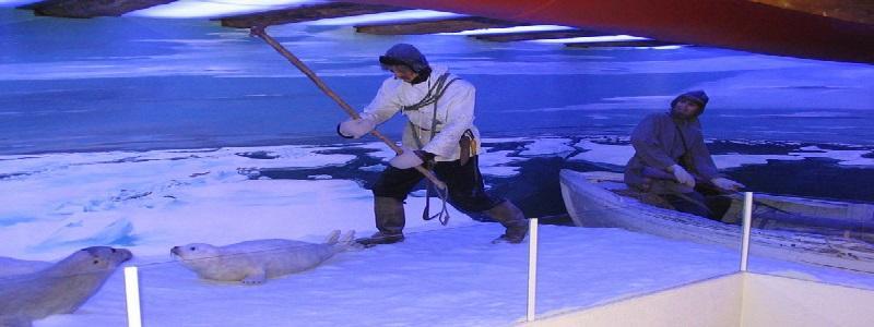Arktisk selfangst utgjør den andre hovedkategorien av fangstutstillinger. Med de lange tradisjoner som Tromsø har bak seg, når det gjelder selfangst, hadde museet meget god tilgjengelighet til utstillingsmateriale på dette området.