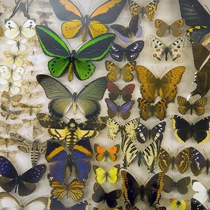 Seksjon for naturvitenskap forvalter samlinger innen botanikk, zoologi, geologi og paleontologi. Vi har objekter fra før Tromsø Museum ble etablert i 1872 , de fleste er fortsatt i god stand. Samlet sett inneholder samlingen over 500000 nummer, der et nummer kan bestå av fra ett til svært mange individer og flere typer preparater (for eksempel skinn, skjelett, vevsprøve fra samme individ). En stor del av samlingene er registrert i databaser, men vi har også en stor del uregistrerte og ubestemte objekter (der antallet er grovt estimert).