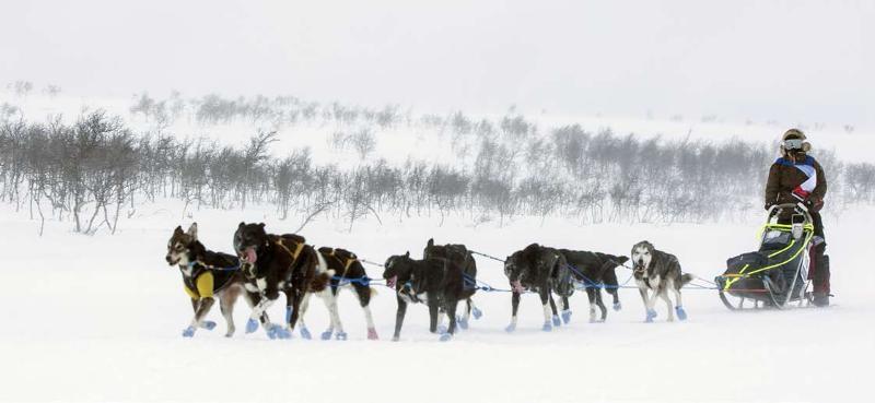Finnmarksløpet byr på mange utfordringer knyttet til terrenget og været. Foto: Mads Suhr Pettersen