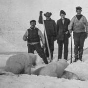 Isbjørn-mini.jpg