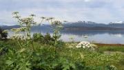Tromsøpalmen