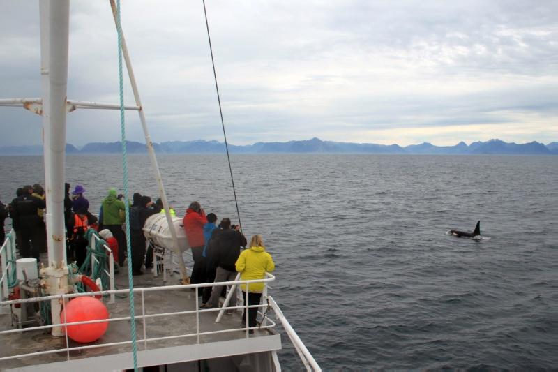 Forskerne i Arctic Encounters mener at flere av problemstillingene i Arktis, knyttet til miljø, næring og politikk er prekære. Derfor er det viktig å utforske hvordan forskningen kan gjøres mest mulig relevant her og nå. Foto: Berit Kristoffersen
