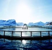 Fiskeoppdrett_square.jpg