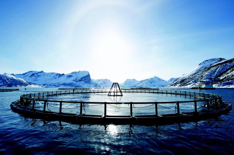 Fiskeoppdrett-johan-wildhagen 2.jpg