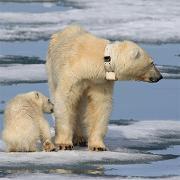globale klimaendringer400-1.jpg