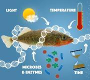 MiljøDNAkvadrat.jpg