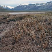 Svalbard-flora-ingress.jpg