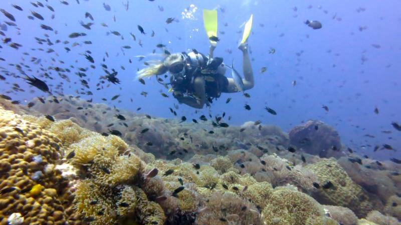 Dykker over korallrev. Foto: Privat