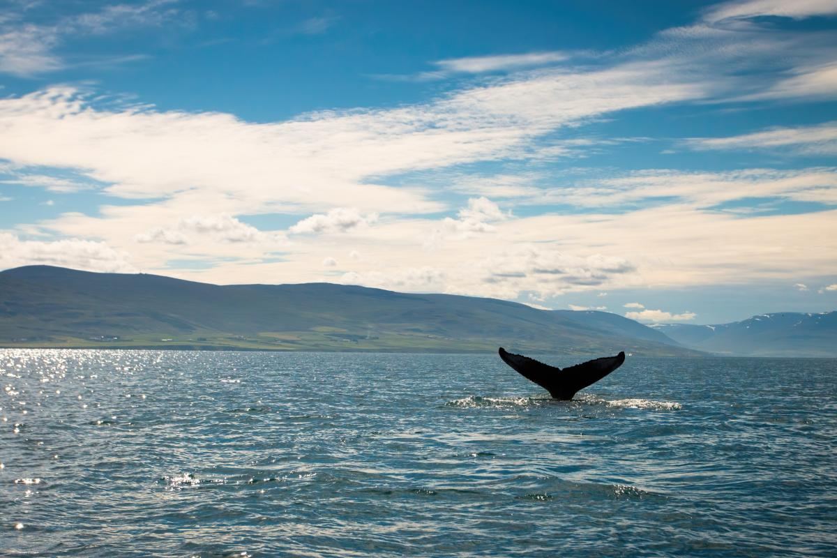 Hav med hvalfinne