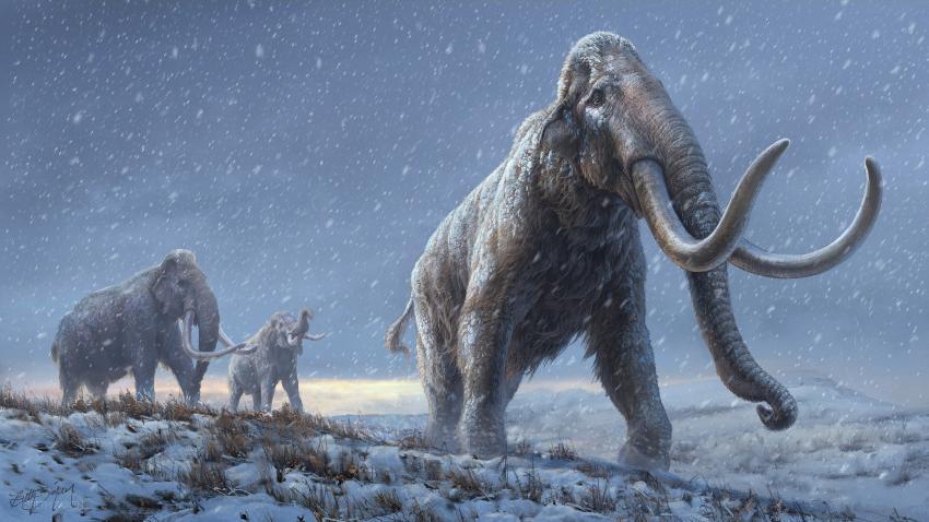 tegning av en mammut som kom før den ullhårete mammuten