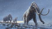 mammut2021.jpg