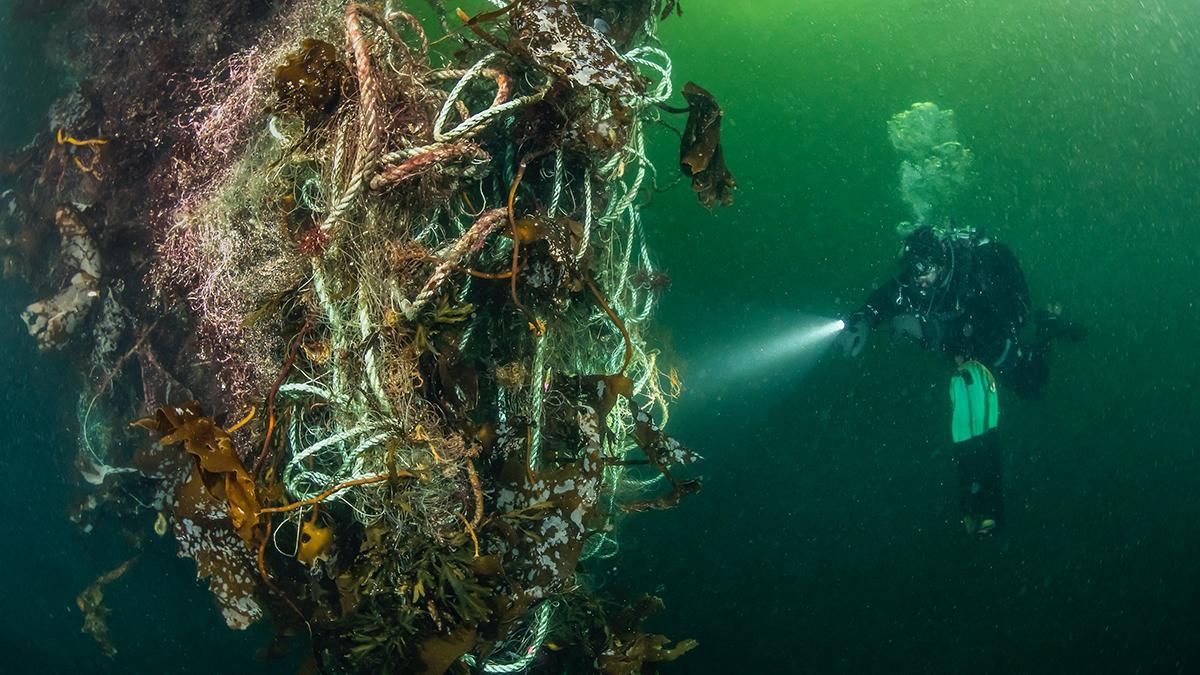 Undervannsfoto av spøkelsesgarn og dykker.