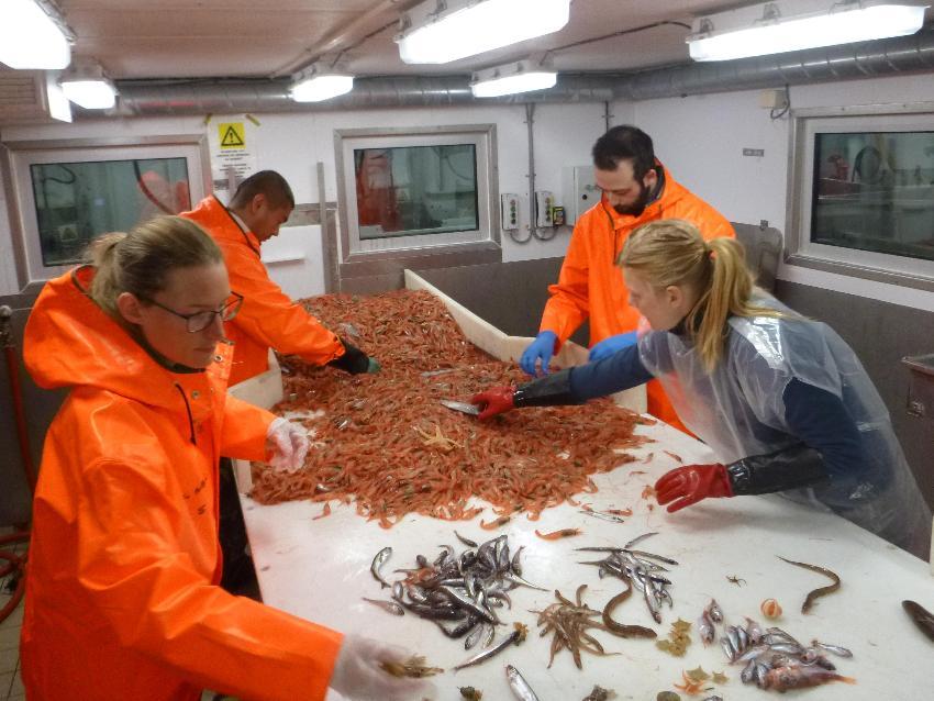 Dyr som er fanget med trål blir sortert om bord.
