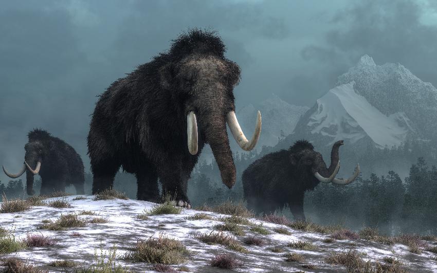 Mammuter på snøkledde sletter med fjell i bakgrunnen